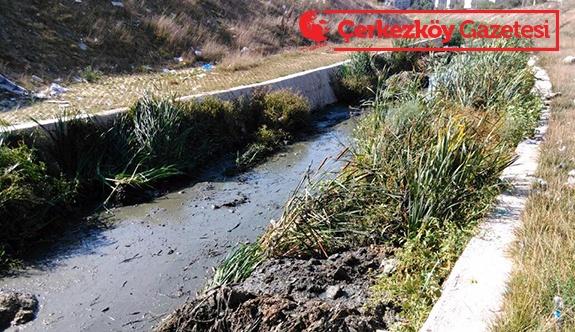 Pınarça Deresi temizleniyor