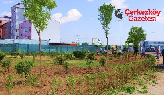 Refüjden sökülen ağaçlar yeni yerlerine dikildi