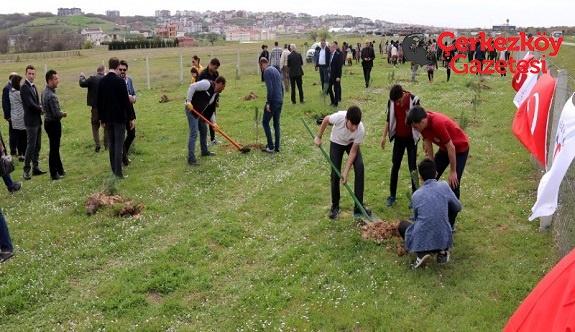 Çerkezköy Belediyesi 250 fidan daha dikti