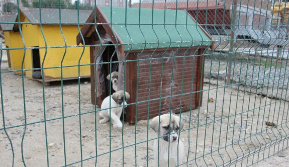 ÇOSB sokak hayvanlarını unutmadı