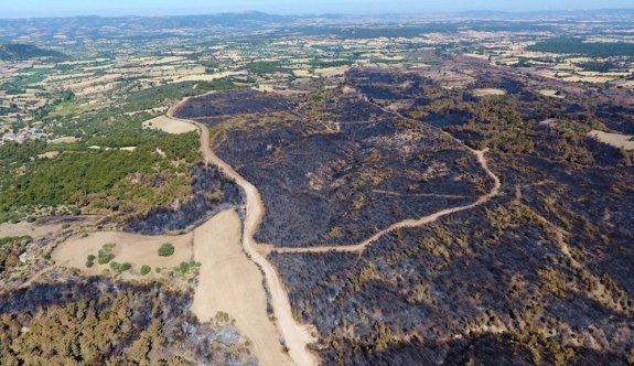 ÇOSB Çanakkale'de yanan ormanlık alanı yeniden ağaçlandıracak