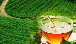 Çayın insan sağlığına etkileri