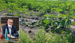 Çiftçilerden kötü haber